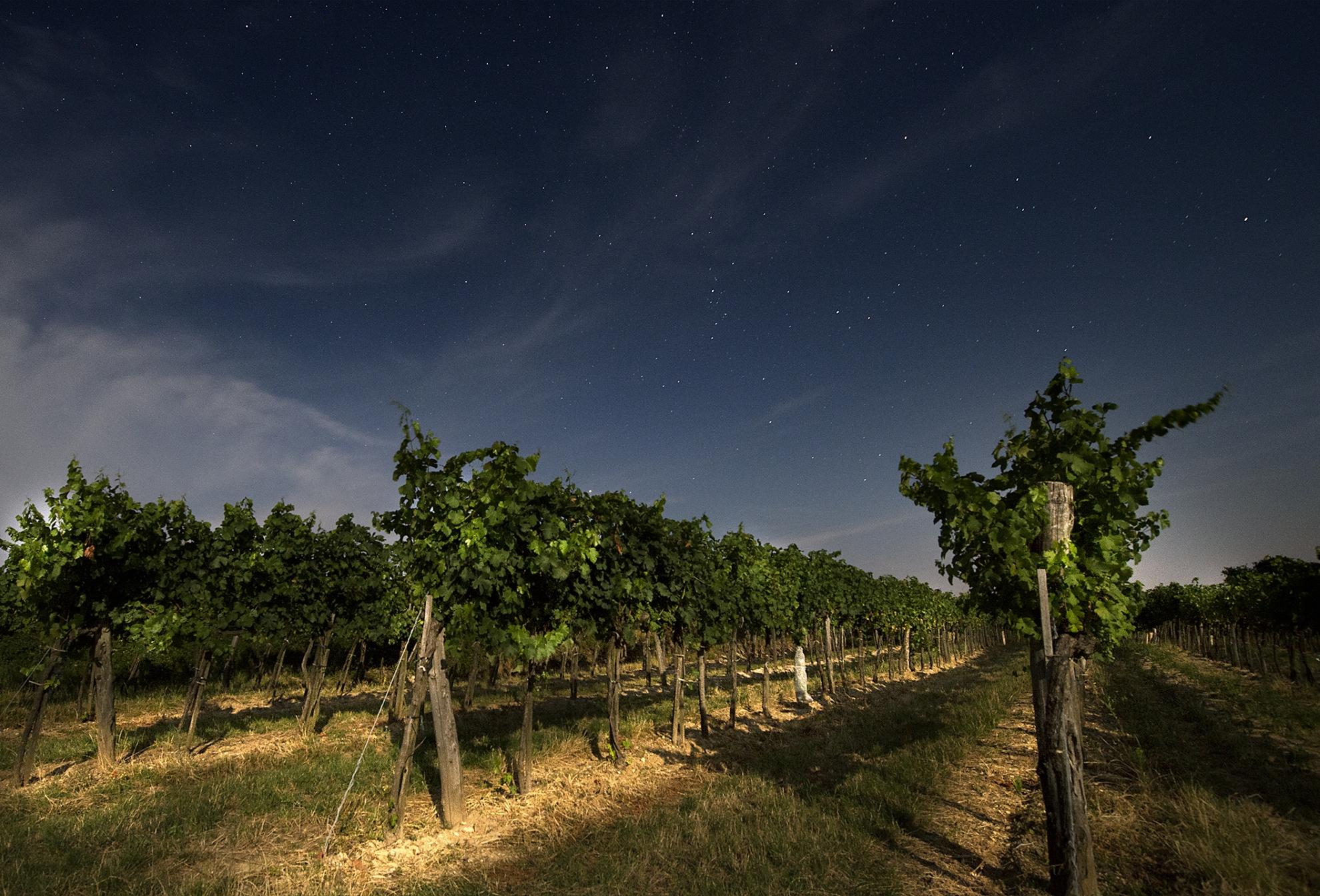 Vinifika-wijndomein-martin-diwald