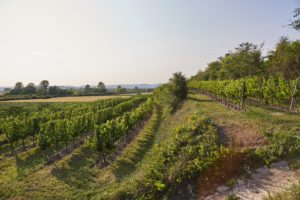 vinifika-kemetner-ried