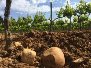Vinifika-domaine-des-carabiniers-soil