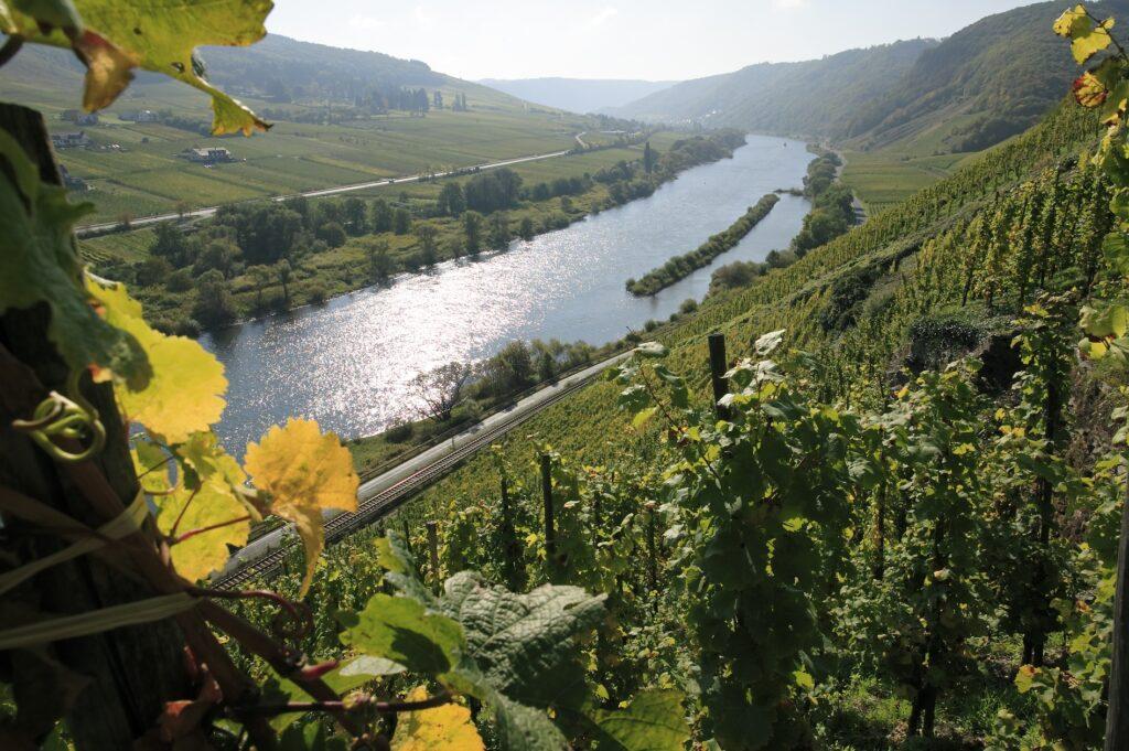 Vinifika-Melsheimer-MullayHofberg