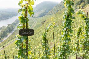 vinifika-weingut-melsheimer-wijngaard-mosel-demeter